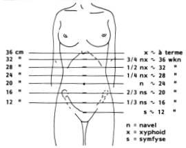 Hoogte Baarmoeder Per Week Zwangerschap
