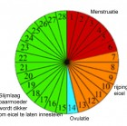 Menstruatie Cyclus, Zo Werkt Het