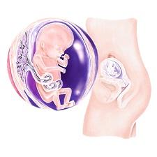 Week 13 Zwangerschap In De Zwangerschapskalender Van Babyopkomst