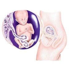 Week 14 Zwangerschap In De Zwangerschapskalender Van Babyopkomst