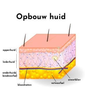 opbouw huid striae
